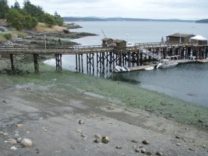 low tide at Friday Harbor Labs